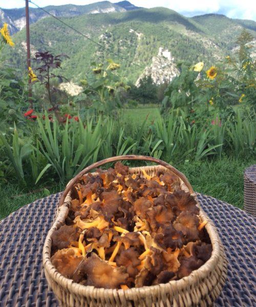 cuisine champignon chanterelle grise